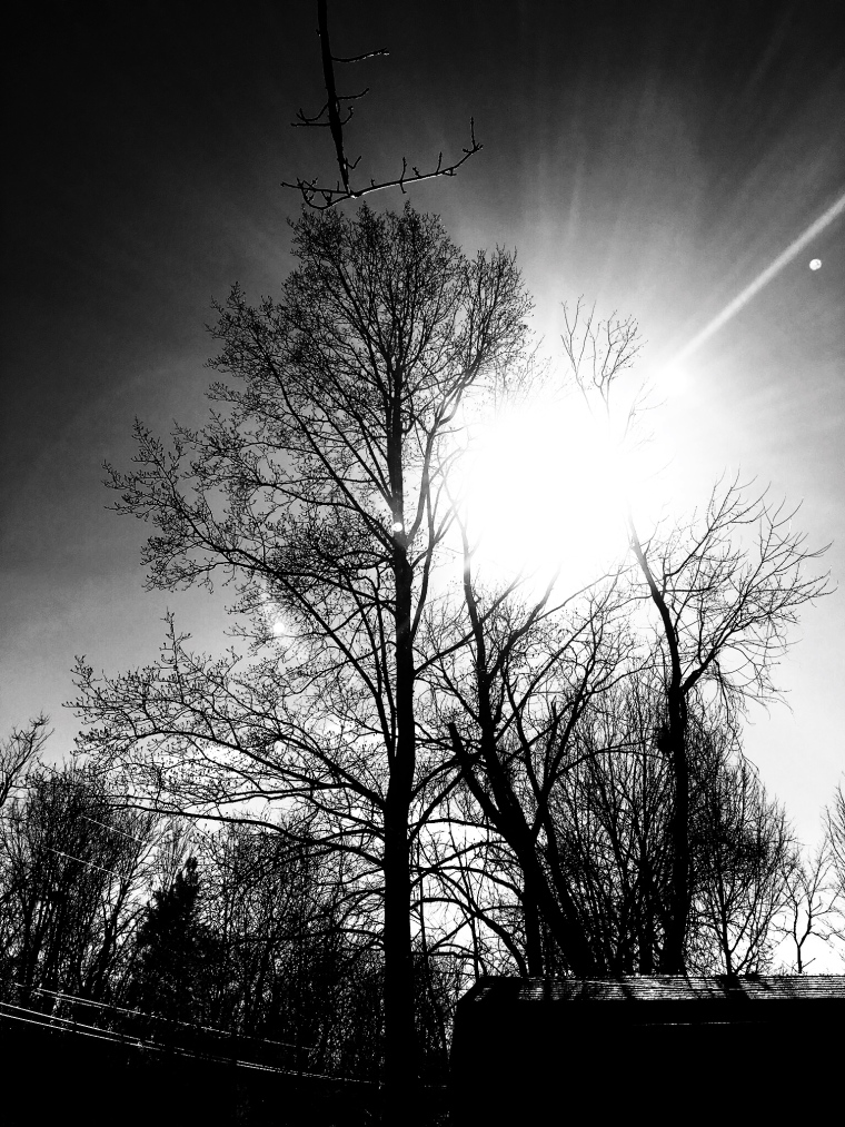 Snapseed 5
